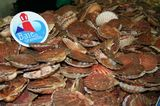 photo coquilles-saint-jacques-2.jpg