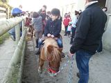 photo balade-poney-shetland-granville-04.jpg